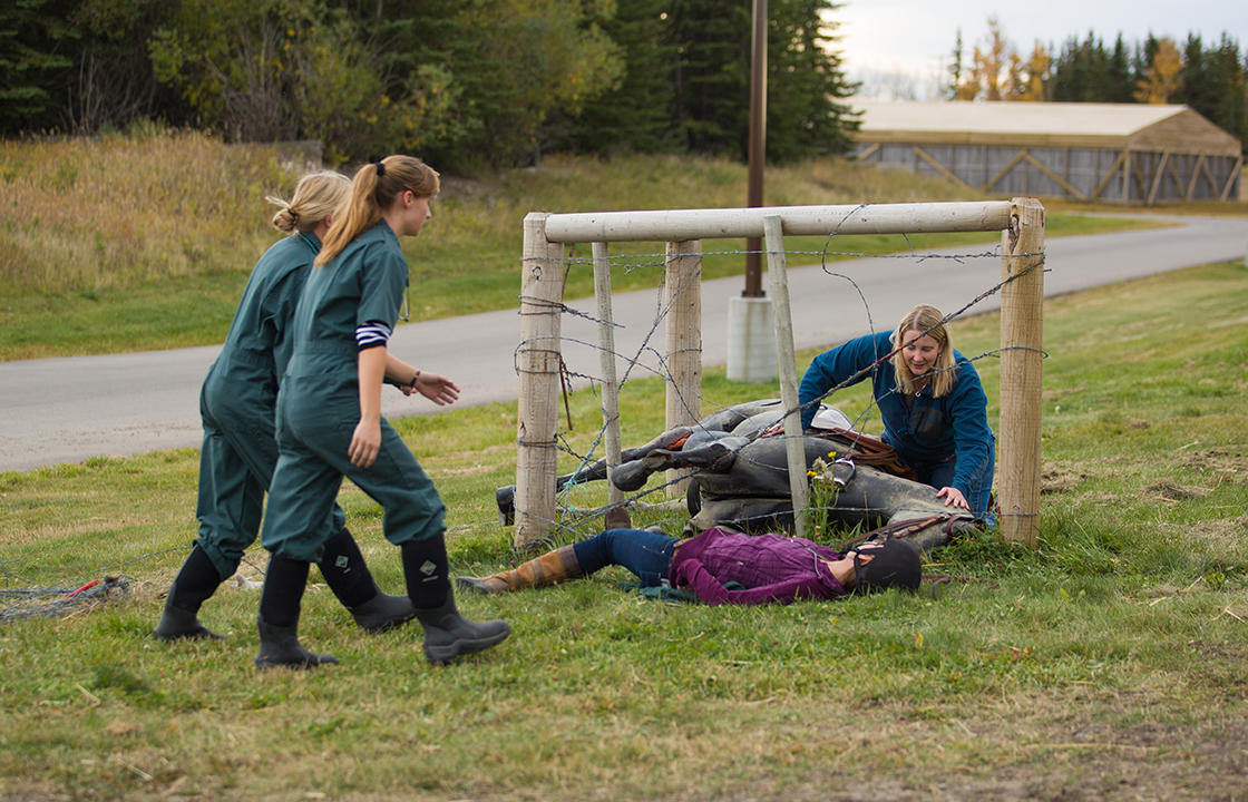 Props at the simulated accident scene include a horse model, barbed wire fencing, and realistic details such as fake blood.