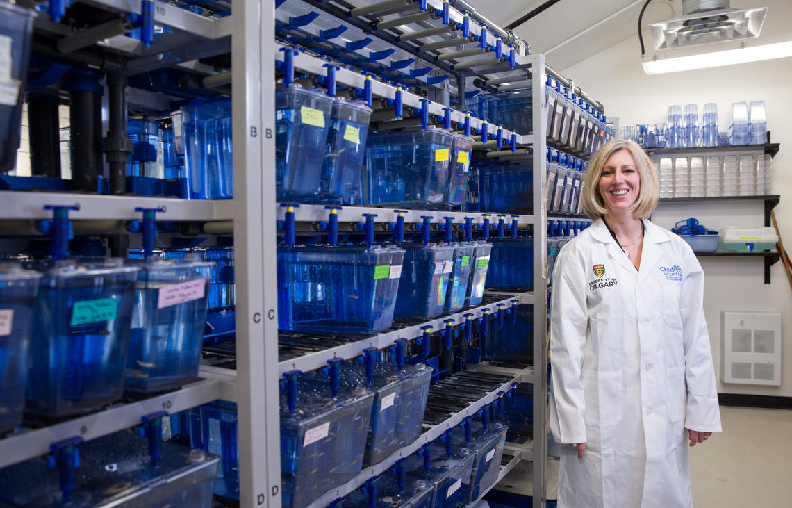 Deborah Kurrasch, a researcher in the University of Calgary's Cumming School of Medicine, has shown that BPA and BPS cause alterations in brain development that can lead to hyperactivity in zebrafish.