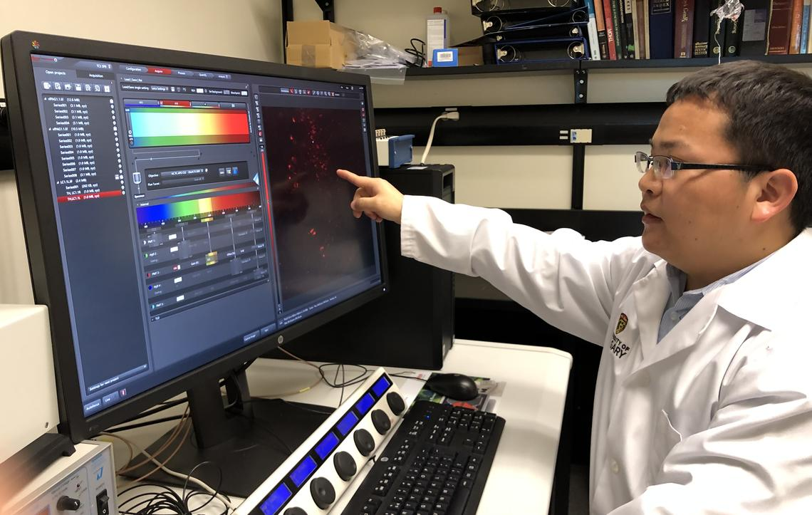 Junting Huang analyzes images that help reveal which neurons in the brain talk to each other.