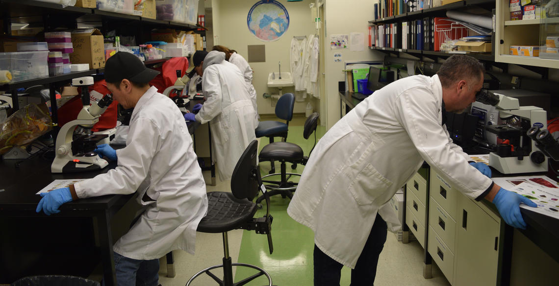 People in lab looking into microscopes