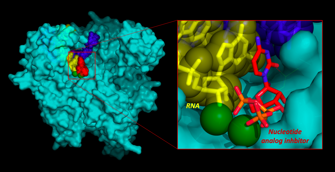 Model of COVID-19 polymerase enzyme bound to RNA and a proposed inhibitor inspired by models of Remdesivir.
