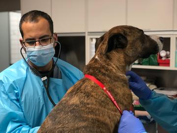 Serge Chalhoub, in full PPE, examines Reese.