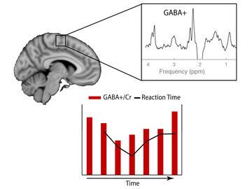 GABA levels