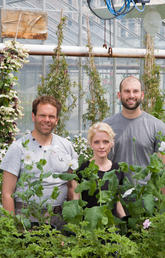 From left: Peter Facchini, professor in biological sciences, Jill Hagel, research associate, and Scott Farrow, PhD student. They have characterized a novel gene that encodes the gateway enzyme in the formation of morphine and begun to understand how poppies synthesize the pain killing enzymes. Photo by Riley Brandt, University of Calgary
