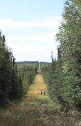 Seismic lines in Alberta's boreal forest boost methane emissions, according to UCalgary study