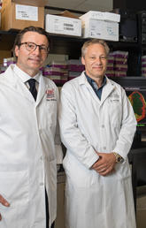 Clinician-scientist Paul Fedak, left, with immunology researchers Paul Kubes and Justin Deniset.