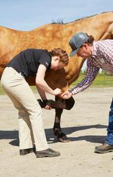 Mike Scott helps Veterinary Medicine student Brenna Sakatch and Erica Ward.