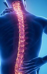 Spinal Cord, Nerve Injury, and Pain