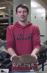 New, large meat-eating dinosaur discovered in Alberta