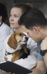 What's the risk of COVID-19 to your pet?