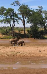 Scientists had assumed that elephants could not become inebriated because of their size