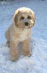 Wellness dog part of Nursing's mental health and wellness initiative