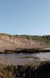 The Joggins Fossil Cliffs in Nova Scotia are a unique and rich site for preserved fossils