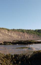 The Joggins Fossil Cliffs in Nova Scotia are a unique and rich site for preserved fossils