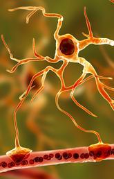 UCalgary researchers shine light on brain's 'star' cells