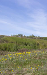 Colorful Indigenous grassland blankets Nose Hill