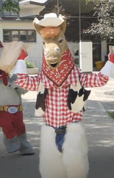Stampede spirit is alive and well at UCalgary