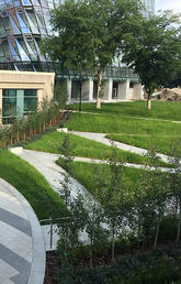 Swann Mall landscape