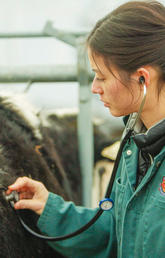 A new series of grants from Alberta Agriculture and Forestry is enabling UCVM's DSU to expand and launch a pilot project to begin providing essential diagnostic services to the Alberta livestock industry