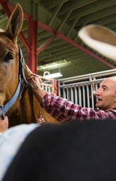 Vet Med researchers study health of gentle giants competing in Stampede's Heavy Horse Pull