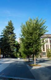 UCalgary campus image