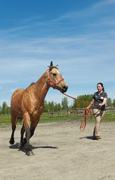 Vet med instructor, Top 40 Under 40 winner continues Indigenous horse clinics through pandemic