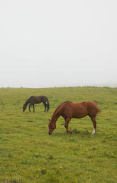 COVID-19 changes horse owners' attitudes about disease outbreaks