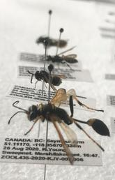 Bug-eyed for research: Undergrads catalogue Calgary's insects