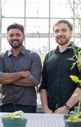 UCalgary scientists produce new canola type for potentially higher crop yield