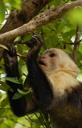 UCalgary scientists use new research method to better understand monkey evolution