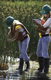 Suncor employees monitor wetlands.