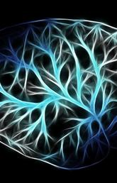 State of consciousness may involve quantum effects, University of Calgary scientists show