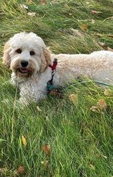Jack Wellness Dog