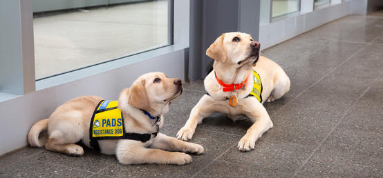 UCalgary employee prepares puppies for future careers as assistance dogs