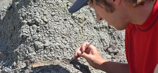 Canadian dinosaurs stayed put for the winter, new study shows